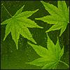 Аватар для Эдуард Бакиров